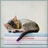 em_kellesvig: A kitten asleep on a stack of books (KittenBooks)