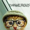 em_kellesvig: A kitten in a hat with glasses text: Dangerous (KittenDangerous)