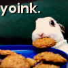 darnedsocks: Image of a plate of biscuits, with a bunny stealing one in its mouth. Text: Yoink. (Bunny yoinks biscuit off plate)