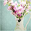 misslucyjane: (sweetpeas on a vase)
