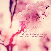 write_my_dreams: (cherry blossoms)