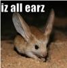 murphys_lawyer: Teh cut3 (All earz)