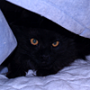 codyne: Kitty Jerry under a blanket (jerry)