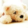 midnightshots: ([bear])