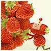 tammy: Katamari strawberry (Katamari strawberry)