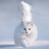 sometimesapet: (tiptoe through snow)