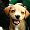 opusculus: A small puppy that appears to be mocking you (Puppy mocks you)