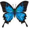 arspoetica: (butterfly friend)