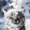 marcicat: (snowy cat)
