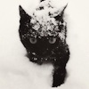 marcicat: (black cat in snow)