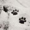 marcicat: (pawprints)