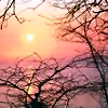 nakeisha: (Winter (Sunset))