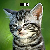"supertights: Image of a tabby kitten with a grumpy face, the word ""Meh"" overlaid. (Meh)"