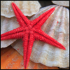 biologist_brenna: (Red Starfish)