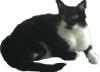 snowhite44: (My Cat)