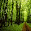 kate: a dirt path through a bright green forest (trees: road less traveled)