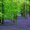 kate: the edge of a forest where the bright green trees meet the lavender field (tree: green and lavender)