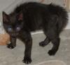 violetcheetah: (winry)