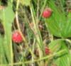 adeley: (strawberry)