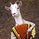irairopa: (koza s bajanom)