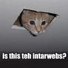 zylly: (Interwebs kitteh)