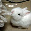 tsuru_san: (animals: bunny nom)