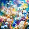 wenelda: (Flowers - rainbow)