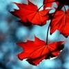wenelda: (Leaves - autumn)