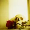 wenelda: (Skull and rose)