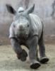 nahman: (baby-rhino)
