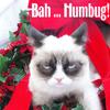 lavendertook: (bah humbug, grumpy cat)
