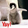 "gridlore: Photo: penguin chick with its wings outstretched, captioned ""Yay!"" (Penguin - Yay!)"