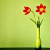 shallowness: bright flowers in vase against green background (flowers that remind me of Layla)