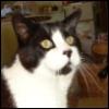 marsden_online: Obligatory pet cat (racky)