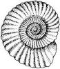 maureenkspeller: (ammonite)