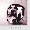 bitter: (haunted; through the veil)