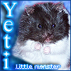 seventhbard: The most wonderful hamster in the world, Yeti, our little monster. (Yeti)