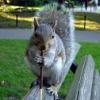 pockysquirrel: (pocky squirrel)