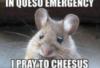 ratoncito: cheesus (Default)