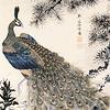 perihadion: (Peacock)