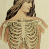 womanbyproxy: girl bones (girl, bones, chest)
