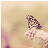lizcommotion: monarch butterfly on a branch (butterfly monarch)