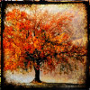 out_there: Picture of a orange-red tree (: Autumn tree)
