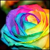 potato_head: (rose)