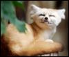 austriarcanis: (Fox)