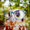 spicychilies: (Owl)