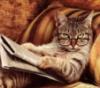 sitella: (кот)