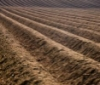 good_to_grow: plowed-field (soil)