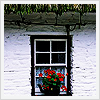 applespice: they are flowers in a window ([pretty] flowers in the window)