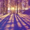 applespice: it is the sun through the snowy trees ([winter] winter sun)